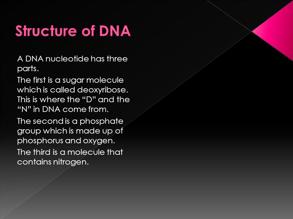 Structure of DNA A DNA nucleotide has three parts.