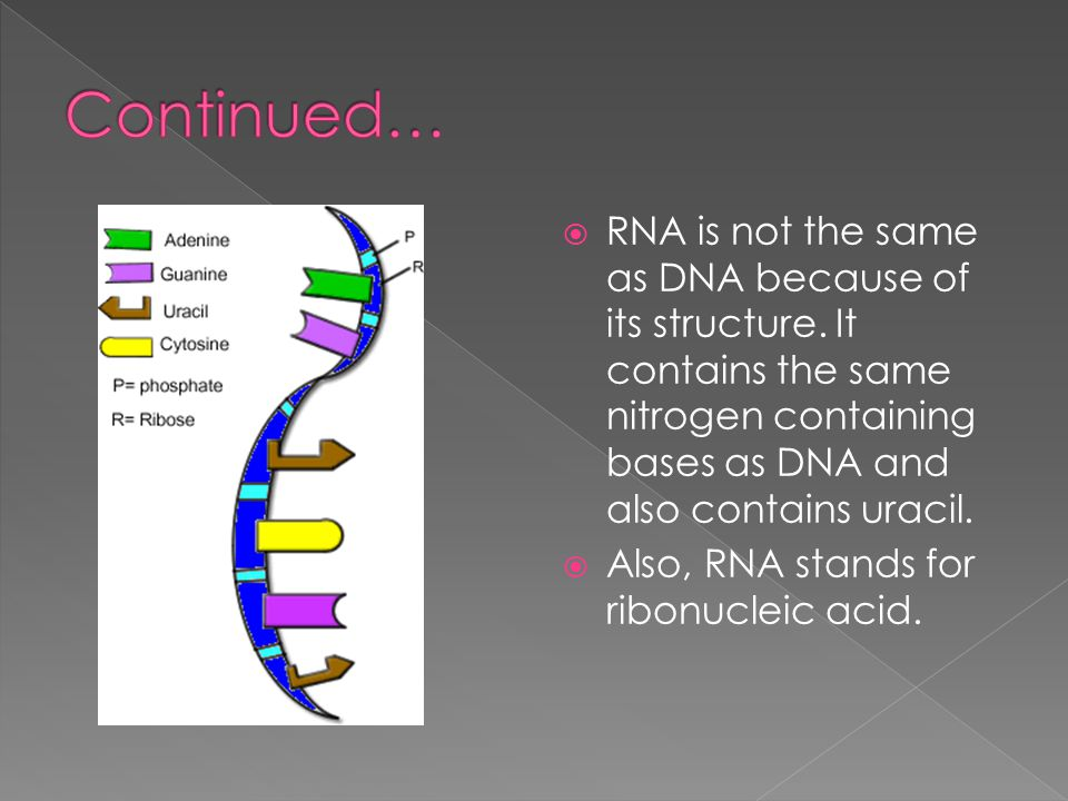 Continued… RNA is not the same as DNA because of its structure. It contains the same nitrogen containing bases as DNA and also contains uracil.