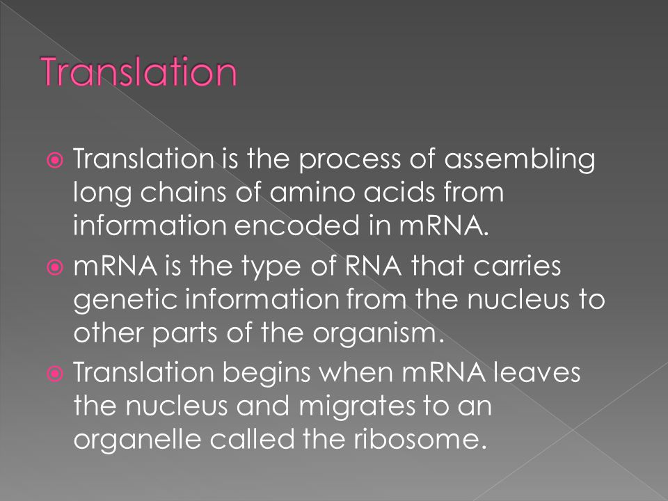 Translation Translation is the process of assembling long chains of amino acids from information encoded in mRNA.