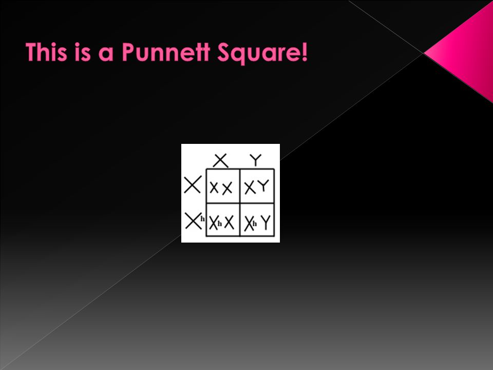 This is a Punnett Square!