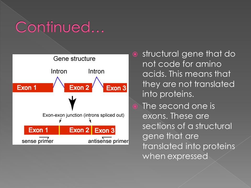 Continued… structural gene that do not code for amino acids. This means that they are not translated into proteins.
