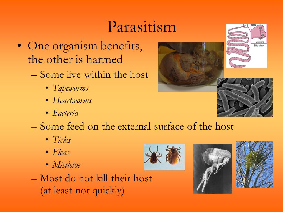 Parasitism One organism benefits, the other is harmed