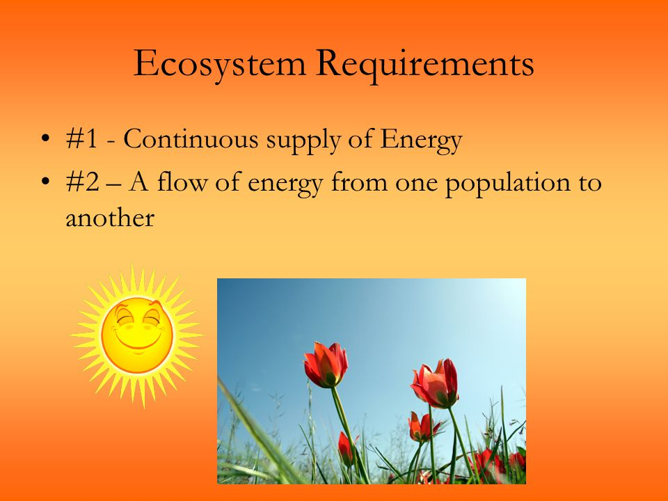 Ecosystem Requirements