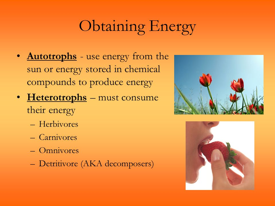 Obtaining Energy Autotrophs - use energy from the sun or energy stored in chemical compounds to produce energy.