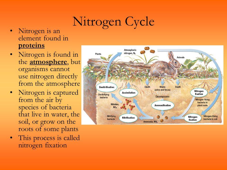 Nitrogen Cycle Nitrogen is an element found in proteins