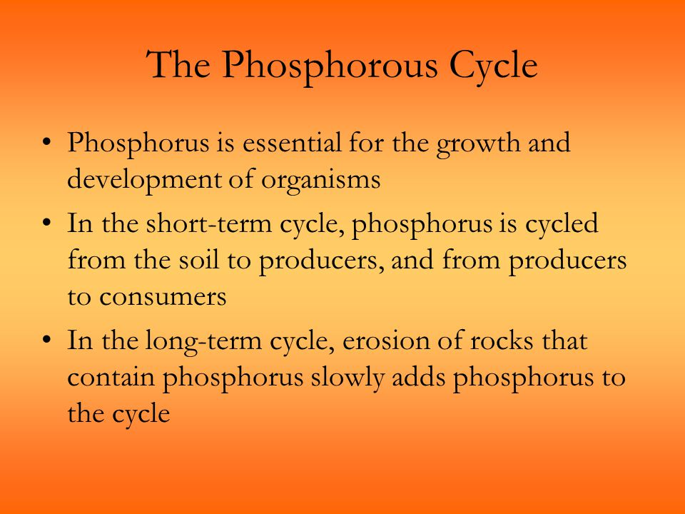 The Phosphorous Cycle Phosphorus is essential for the growth and development of organisms.