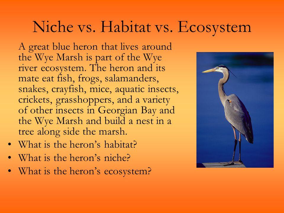 Niche vs. Habitat vs. Ecosystem