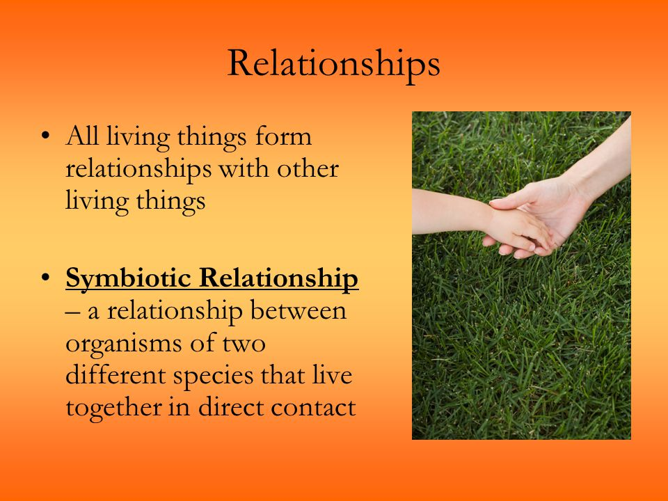 Relationships All living things form relationships with other living things.