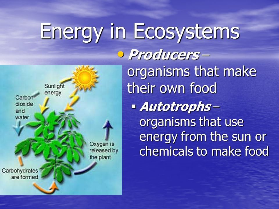 Energy in Ecosystems Producers – organisms that make their own food