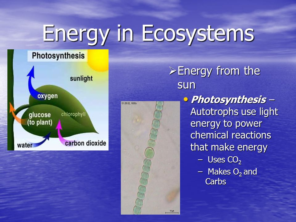 Energy in Ecosystems Energy from the sun