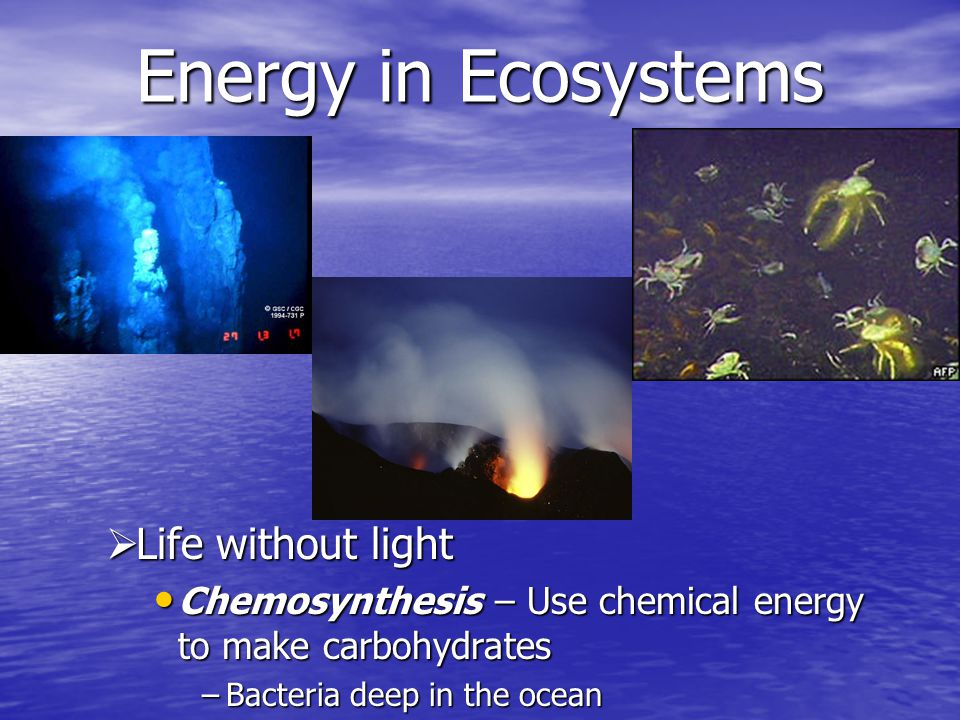 Energy in Ecosystems Life without light