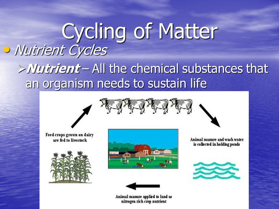 Cycling of Matter Nutrient Cycles