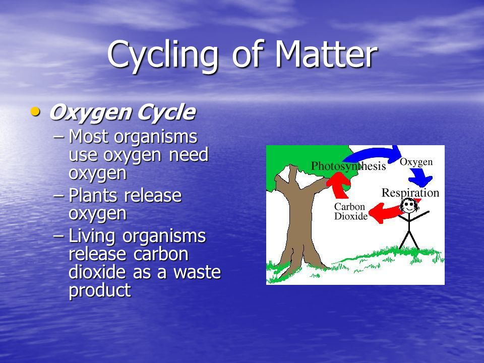 Cycling of Matter Oxygen Cycle Most organisms use oxygen need oxygen