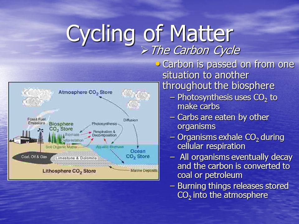 Cycling of Matter The Carbon Cycle