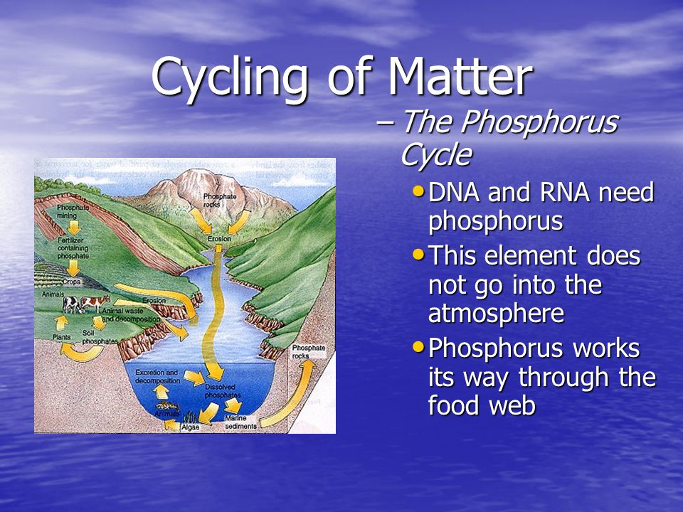 Cycling of Matter The Phosphorus Cycle DNA and RNA need phosphorus