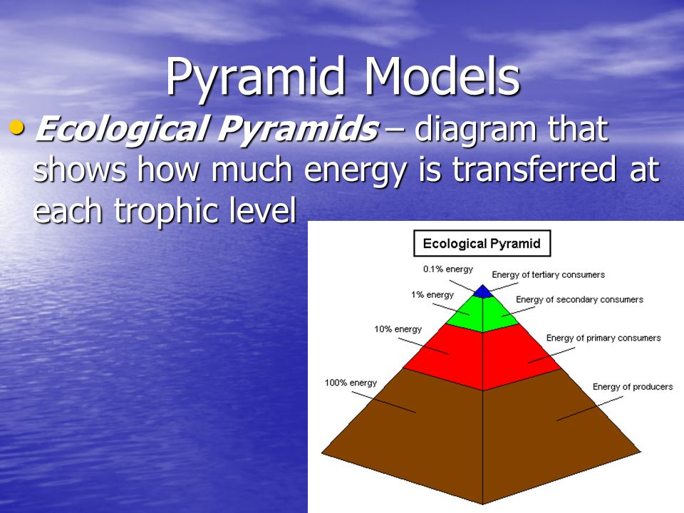 Pyramid Models Ecological Pyramids – diagram that shows how much energy is transferred at each trophic level.