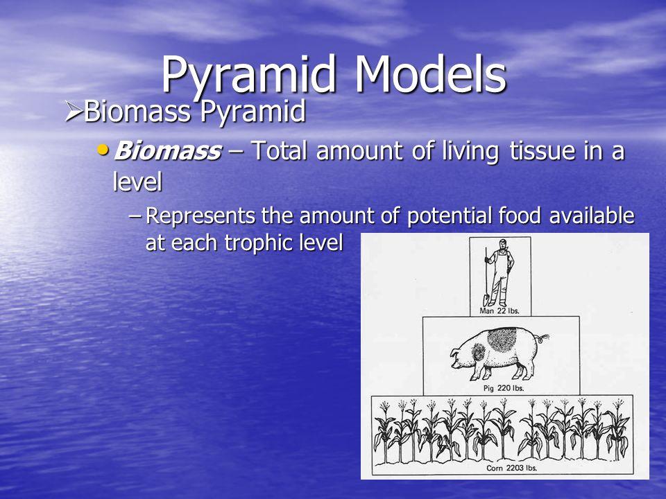 Pyramid Models Biomass Pyramid