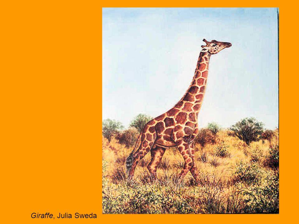 Giraffe, Julia Sweda
