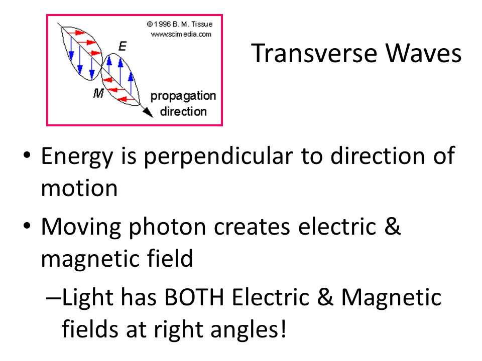 Transverse Waves Energy is perpendicular to direction of motion