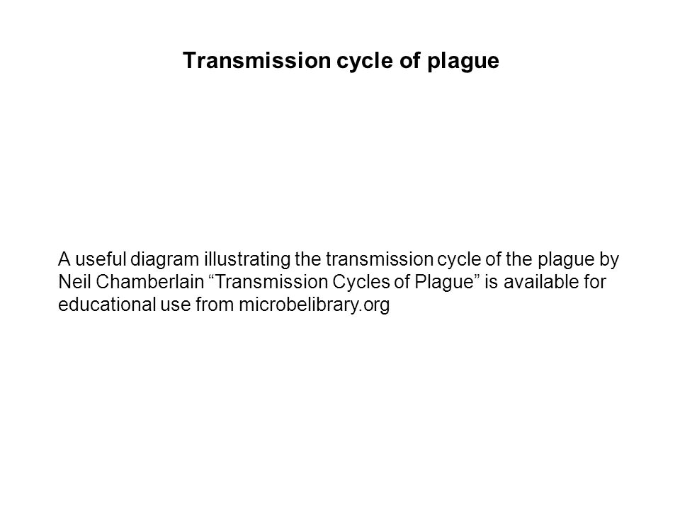 Transmission cycle of plague