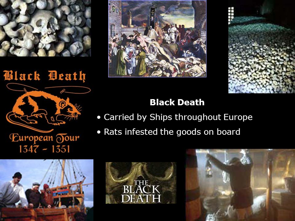 Black Death Carried by Ships throughout Europe Rats infested the goods on board