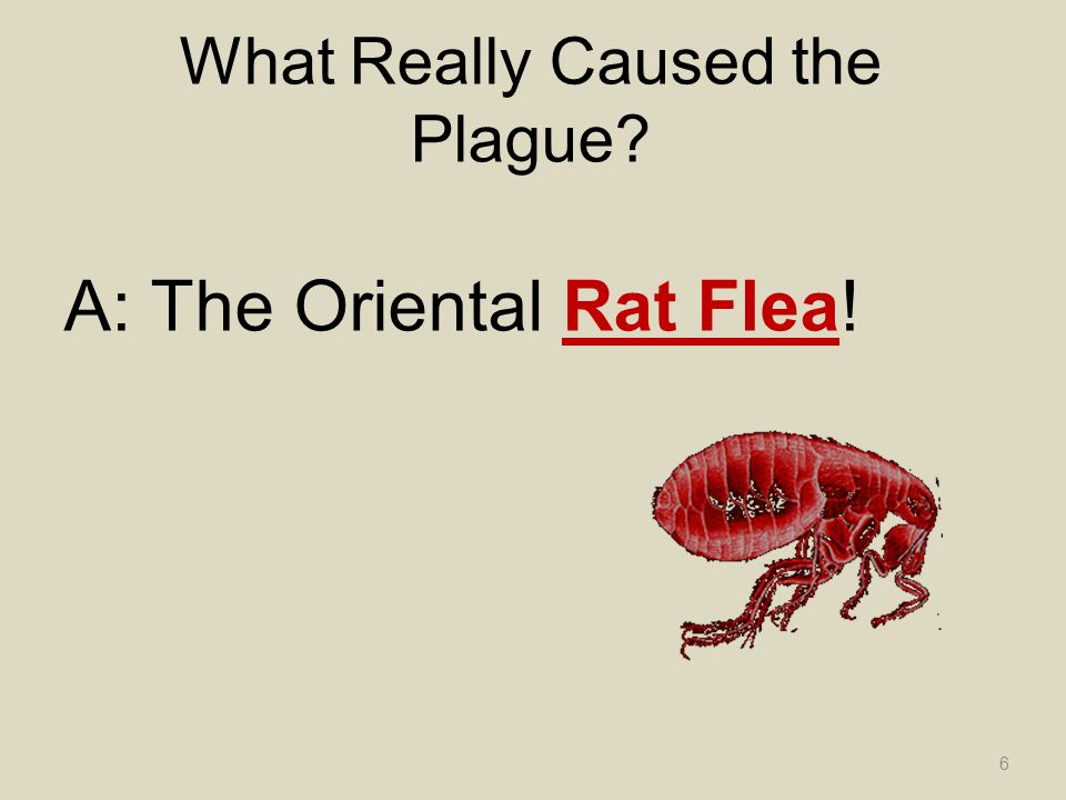 What Really Caused the Plague