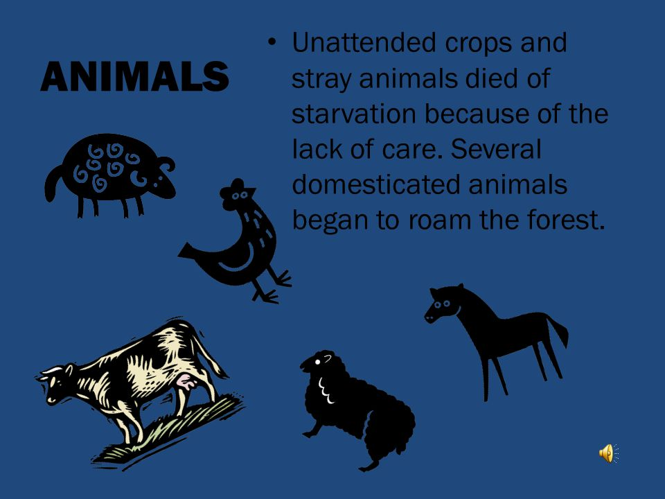 ANIMALS Unattended crops and stray animals died of starvation because of the lack of care.