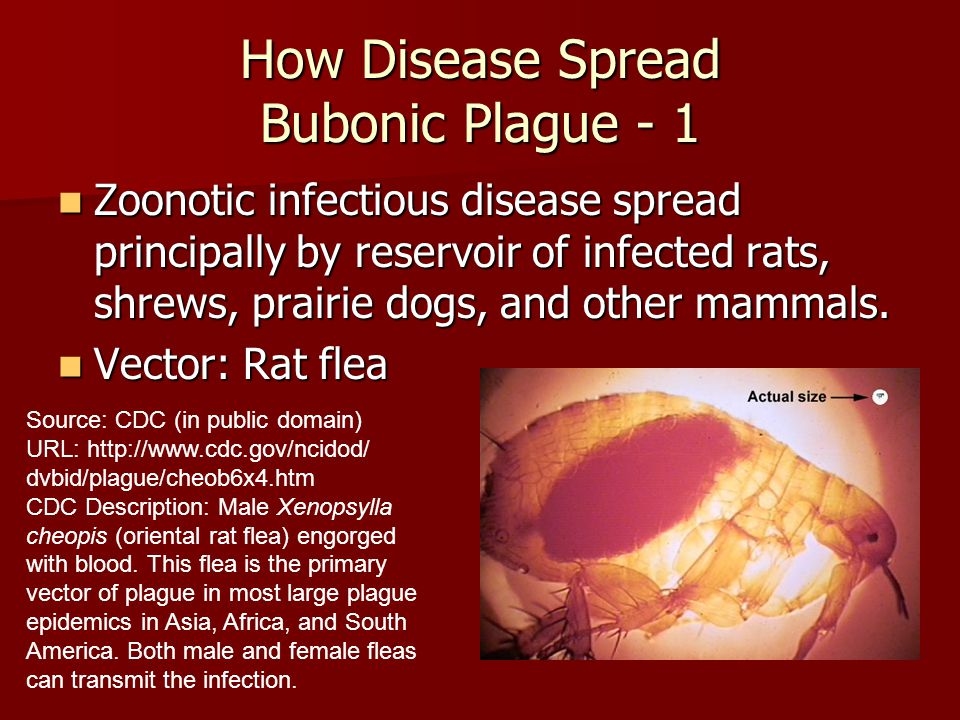 a description of the bubonic plague disease profile The black death was a devastating global epidemic of bubonic the disease had struck you will soon receive an email with a direct link to your profile.