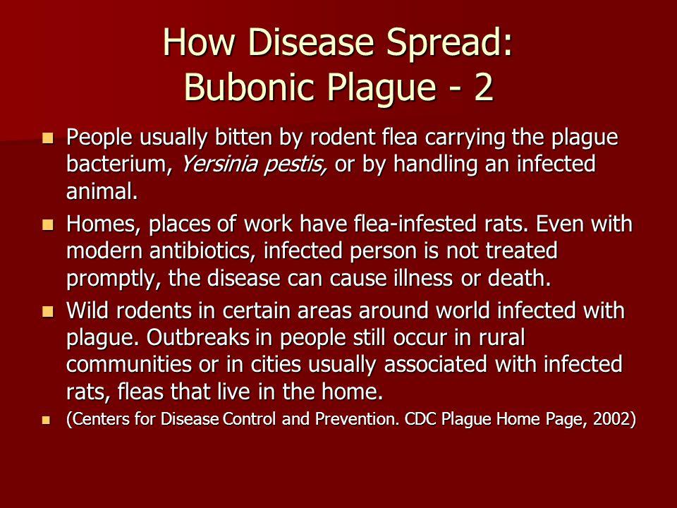 How Disease Spread: Bubonic Plague - 2