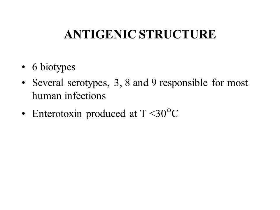 ANTIGENIC STRUCTURE 6 biotypes