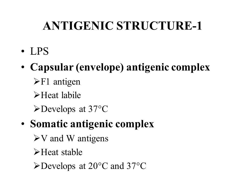 ANTIGENIC STRUCTURE-1 LPS Capsular (envelope) antigenic complex