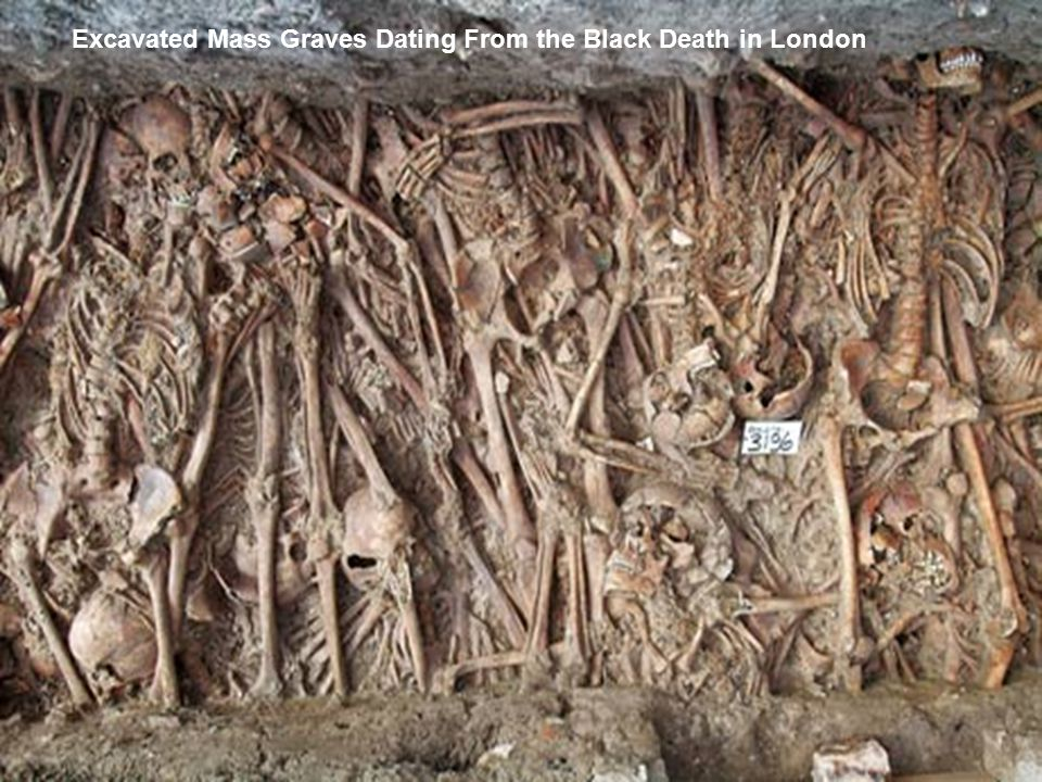 Excavated Mass Graves Dating From the Black Death in London