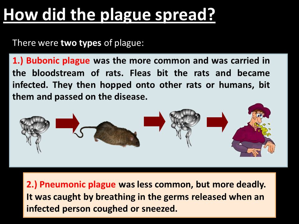 How did the plague spread