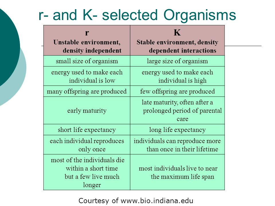 r- and K- selected Organisms