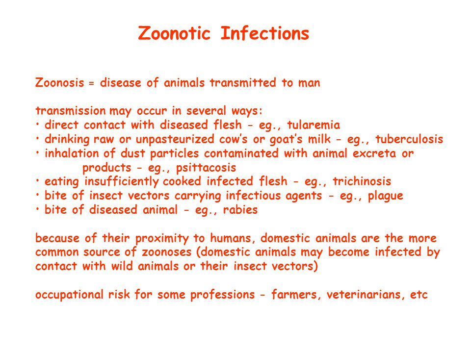 Zoonotic Infections Zoonosis = disease of animals transmitted to man