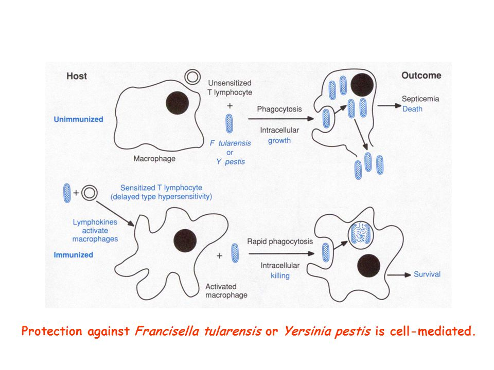 Protection against Francisella tularensis or Yersinia pestis is cell-mediated.