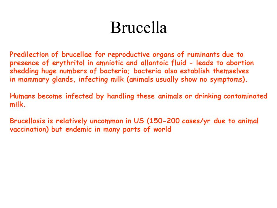 Brucella Predilection of brucellae for reproductive organs of ruminants due to.
