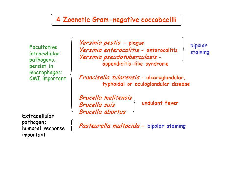 4 Zoonotic Gram-negative coccobacilli