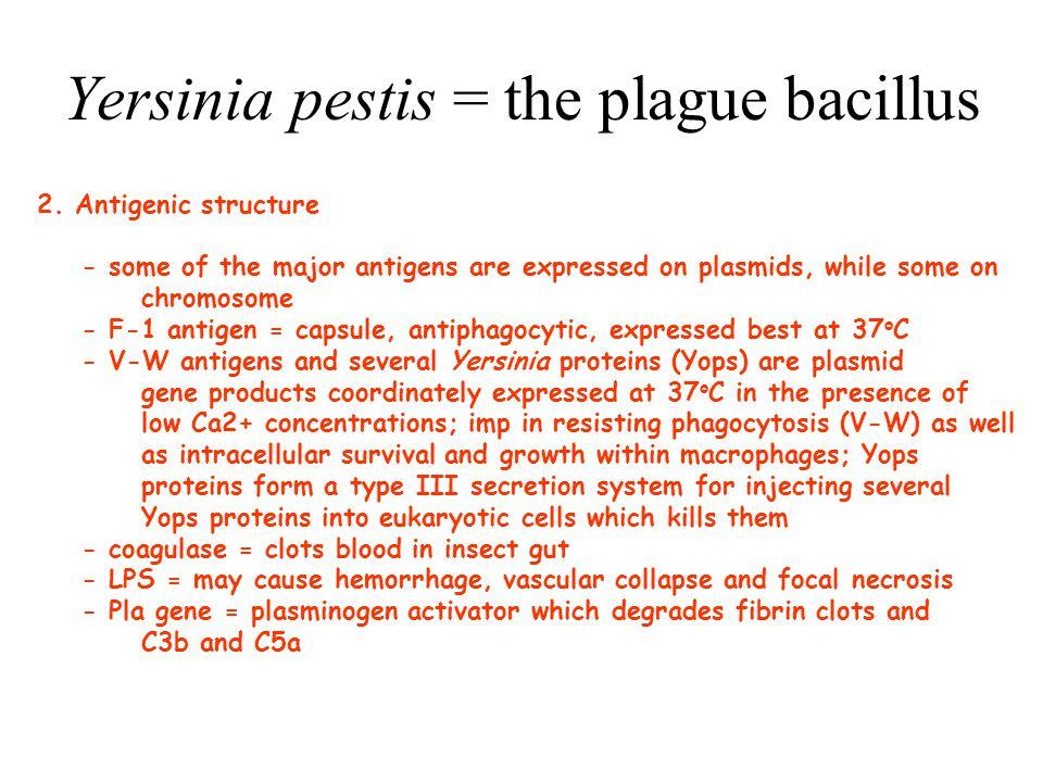 Yersinia pestis = the plague bacillus