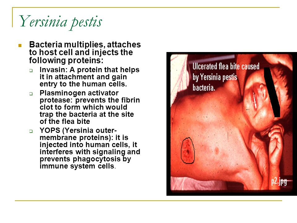 Yersinia pestis Bacteria multiplies, attaches to host cell and injects the following proteins: