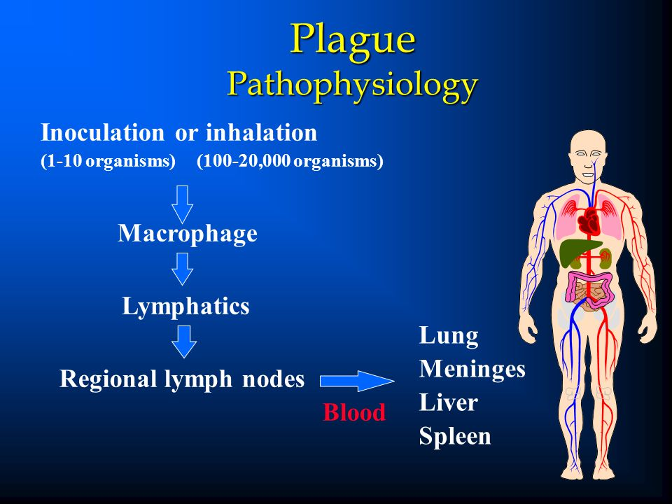 Plague Pathophysiology