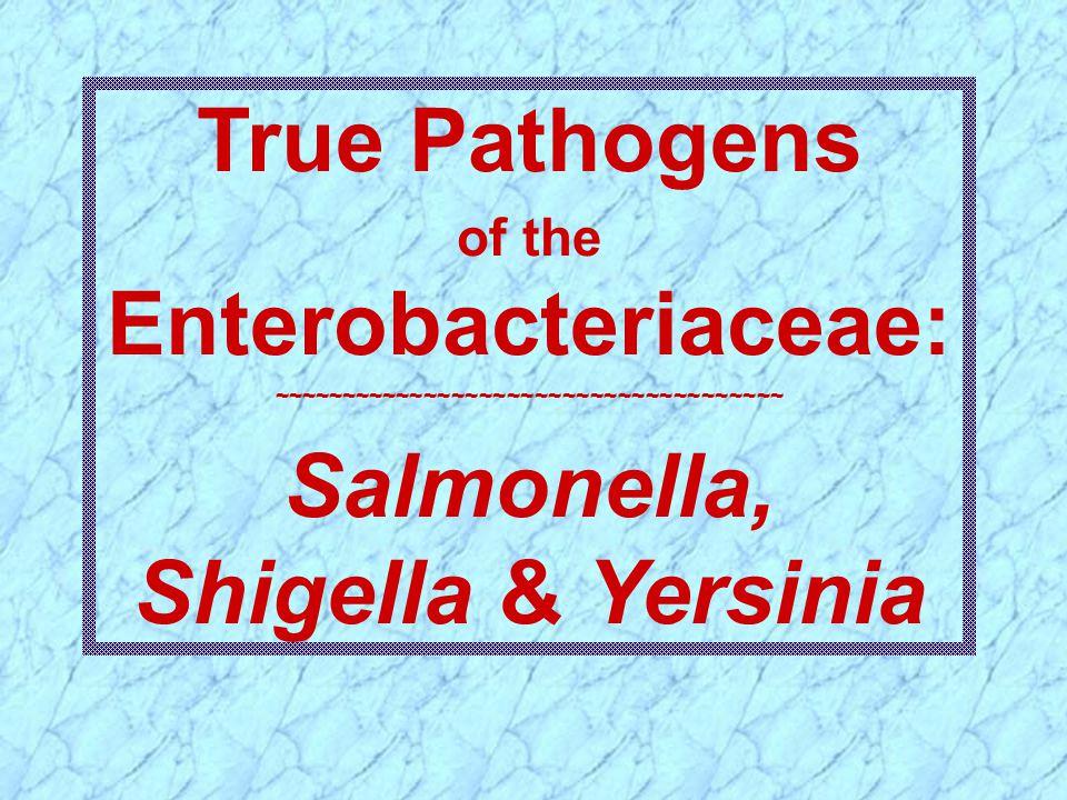 True Pathogens Salmonella, Shigella & Yersinia