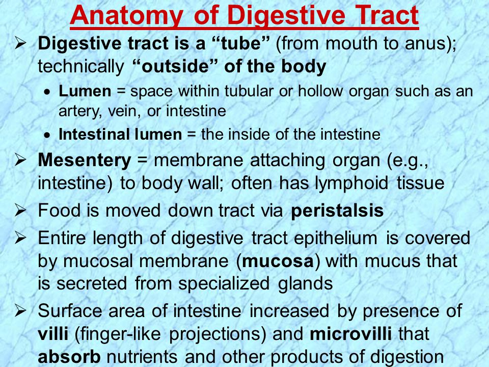 Anatomy of Digestive Tract