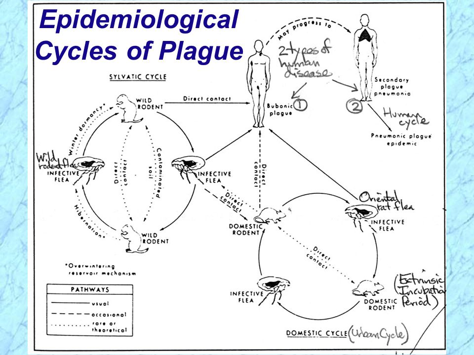 Epidemiological Cycles of Plague