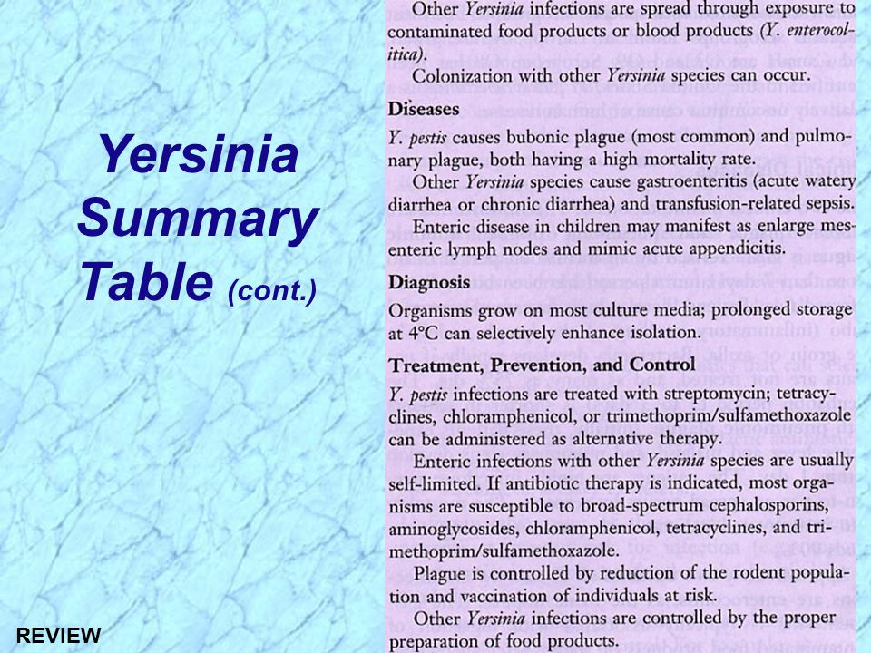 Yersinia Summary Table (cont.)
