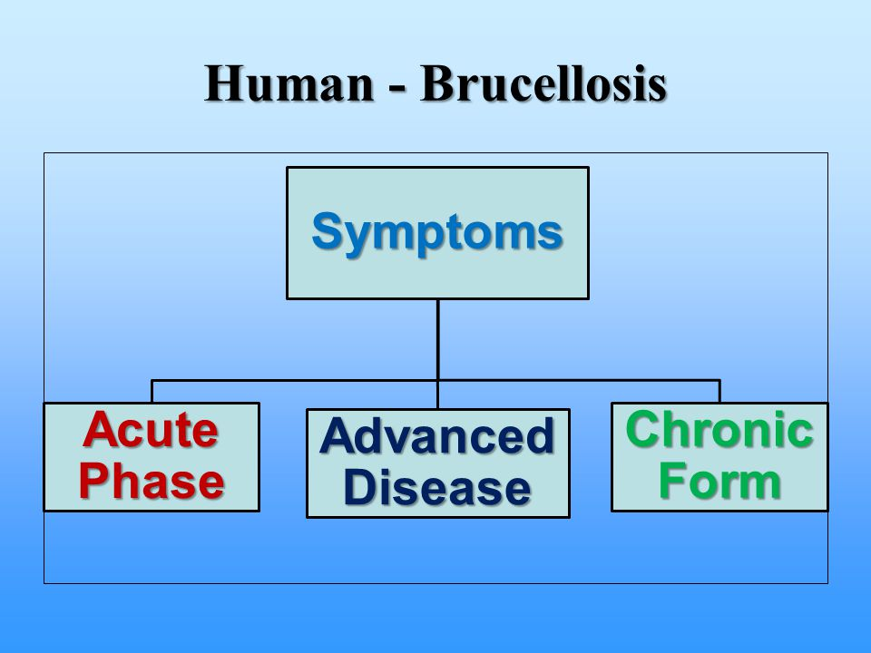 Human - Brucellosis Symptoms. Acute Phase. Advanced Disease. Chronic Form. Symptoms may not develop for up to 2 months from time of exposure.