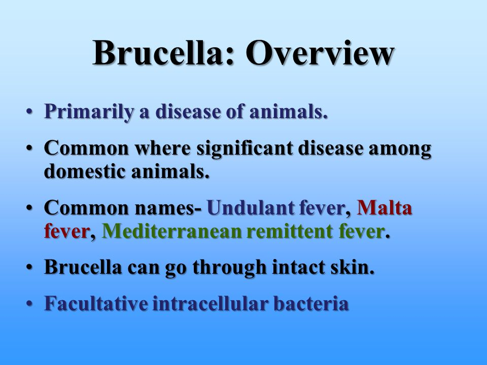 Brucella: Overview Primarily a disease of animals.