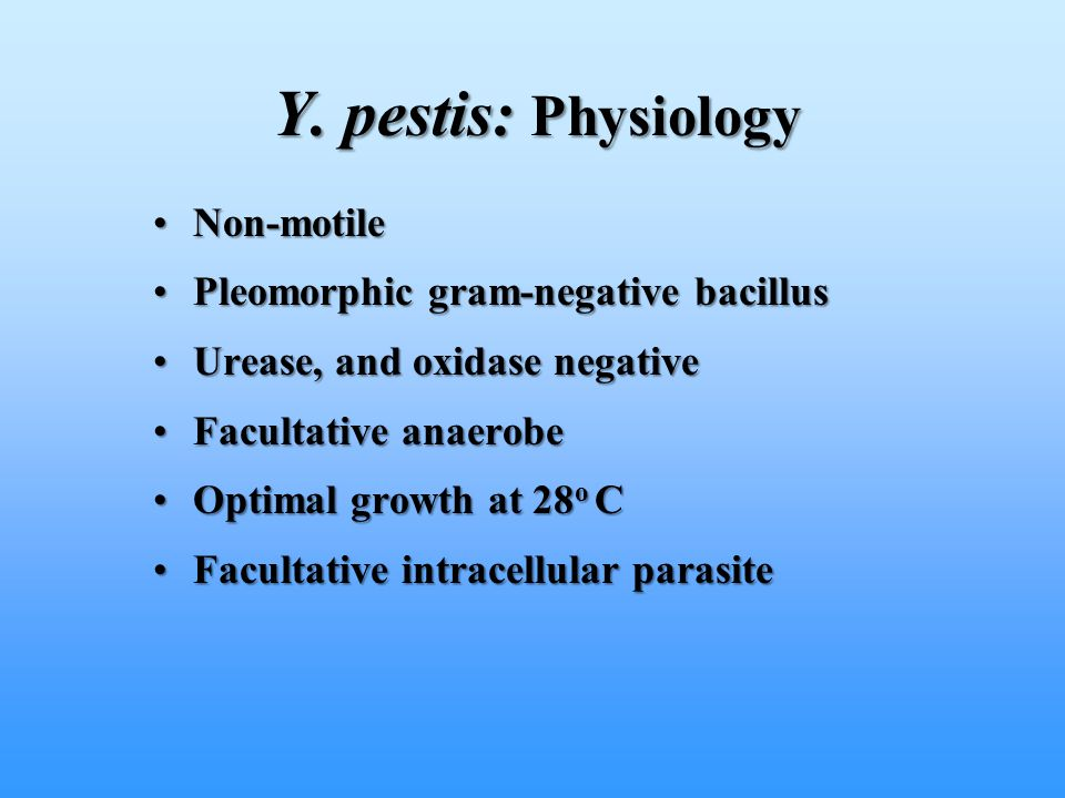 Y. pestis: Physiology Non-motile Pleomorphic gram-negative bacillus