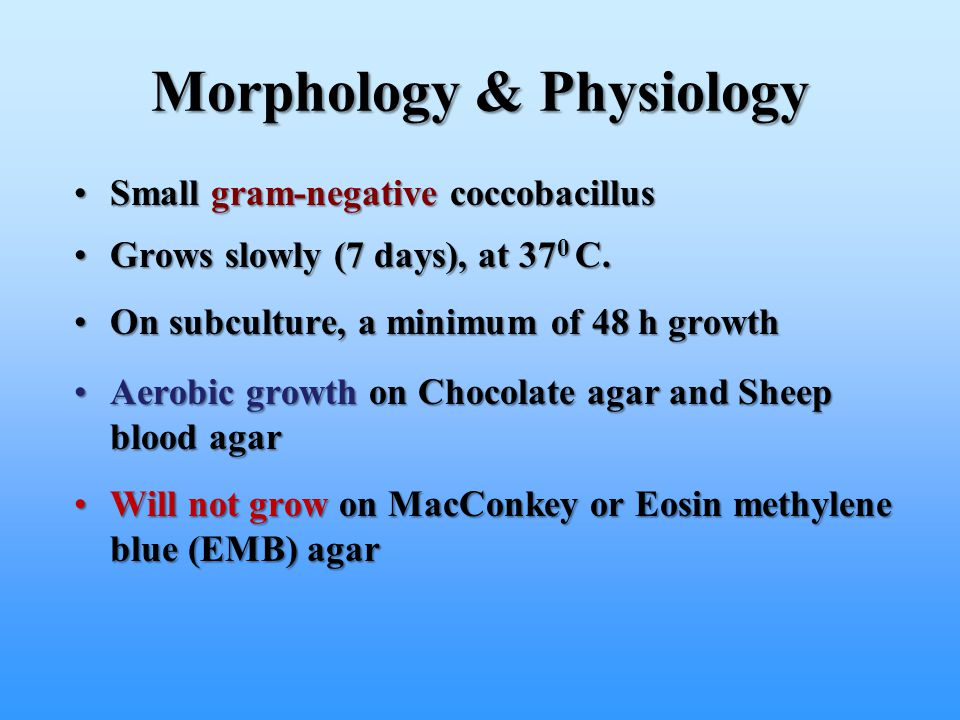 Morphology & Physiology