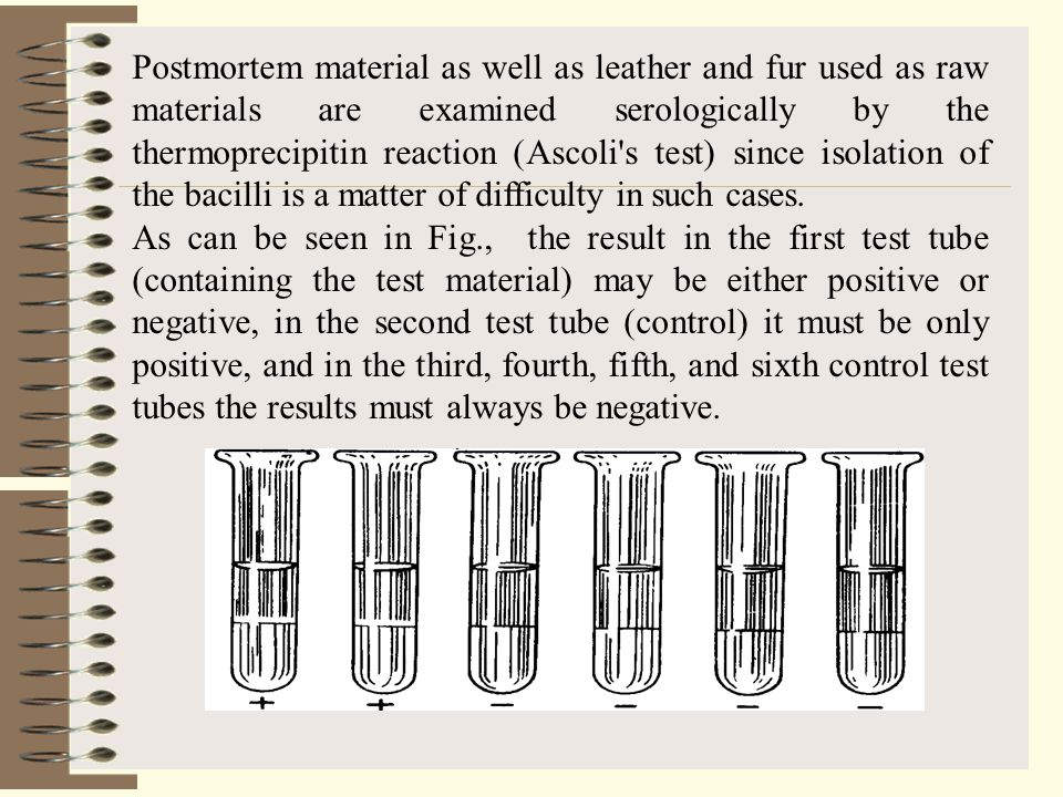 Postmortem material as well as leather and fur used as raw materials are examined serologically by the thermoprecipitin reaction (Ascoli s test) since isolation of the bacilli is a matter of difficulty in such cases.